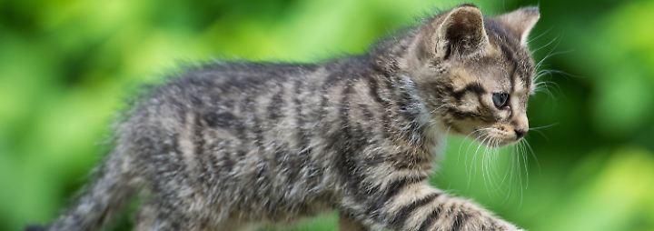 Nacktmodelle, Millionäre, Retter: Die Katze ist die beste Freundin der Deutschen