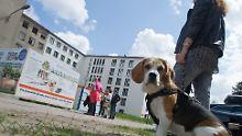 Bauboom auf Rügen: Nazi-Betonklotz Prora ist begehrt