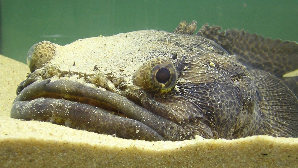 laute von feinden und beute krötenfische reagieren  ~ Geschirrspülmaschine Laute Geräusche