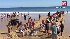 Verzweifelter Rettungsversuch: Strandbesucher bugsieren Hai zurück ins Wasser
