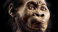 Fundsache, Nr. 1304: Neue Menschenart in Höhle entdeckt