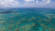 Korallen sterben großflächig: Dem Great Barrier Reef geht es schlecht