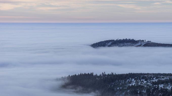 Nebel im Harz.