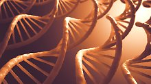 Jahrtausendealte DNA entschlüsselt: Wanderung nach Afrika größer als bekannt