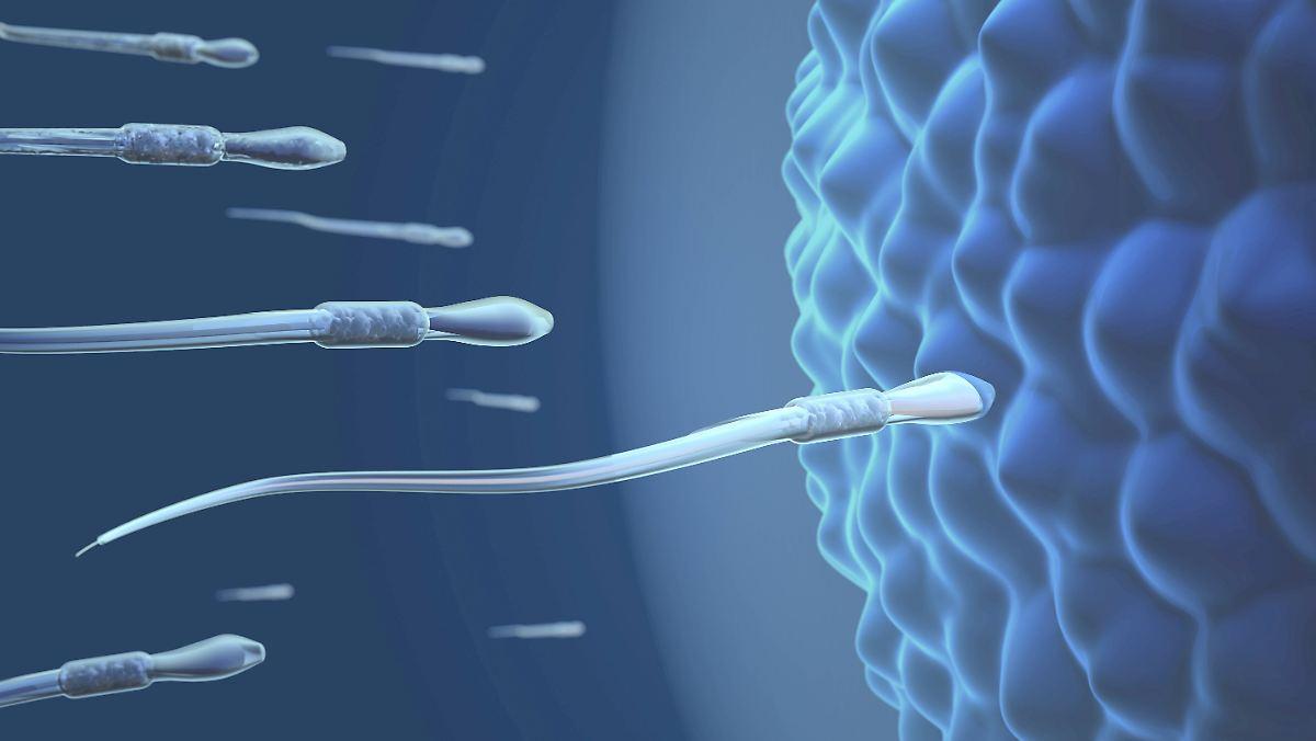 Größe Spermien