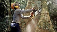 Abholzung am Amazonas:Jedes Jahr verschwinden 13 Millionen Hektar Wald – das entspricht in etwa der Fläche Griechenlands. Foto: Werner Rudhart/Archiv