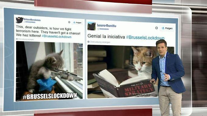 n-tv Netzreporter: Brüssel trotzt Terrorgefahr mit Katzenbildern