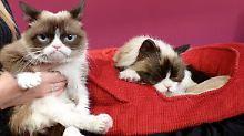 Wie schrecklich!: Grumpy Cat bei Madame Tussauds