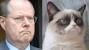 """Das Imperium der mürrischen Katze: """"Grumpy Cat"""" bekommt schlecht gelaunten Doppelgänger"""
