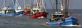 Mehr Hering, Scholle und Kabeljau: Nordseefischer dürfen ihre Netze füllen