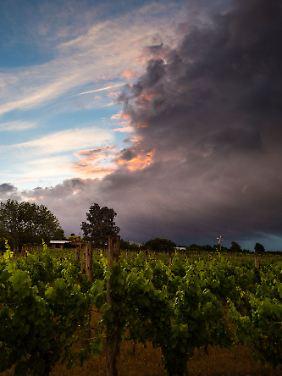 Dramatische Wolkenformationen und wunderschöne Lichtstimmungen sind Alltag im Wairarapa.