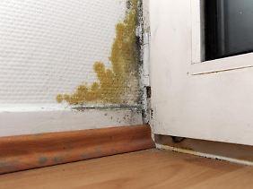 Ein Schimmelfleck neben der Balkontür kann durch falsches Lüften oder Risse in der Außenwand entstehen - oft streiten Mieter und Vermieter, wer für den Schaden verantwortlich ist und wer die Kosten für die Beseitigung übernehmen muss.