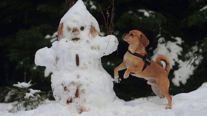 Bei einem Schneemann sind wohl nicht allzu viele Emotionen zu erkennen.