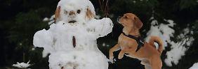 An Gesichtsausdruck und Stimme: Hunde erkennen menschliche Emotionen