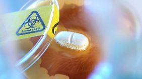 Antibiotikum-Test im Labor.