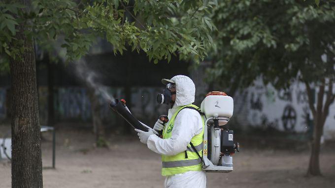 """Kölnerin offenbar positiv getestet: WHO rechnet mit """"explosionsartiger Ausbreitung"""" von Zika"""