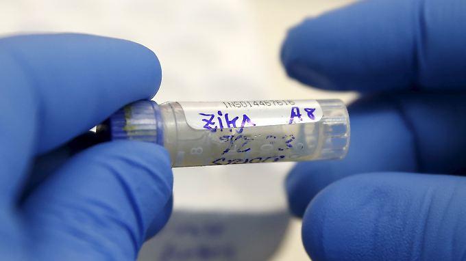 Infektion in Texas: Venezuela-Urlauber überträgt Zika-Virus durch Sex