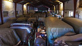 """Der Zustand vieler der knapp 60 Autos, ist nicht ungewöhnlich für einen """"Scheunenfund""""."""