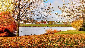 So schön ist es im Herbst im neuseeländischen Tokoroa. Eine traumhafter Job wartet hier seit zwei Jahren auf Bewerber. (Wikipedia-3D-Aufnahme)