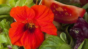 Die hübschen Blüten der Kapuzinerkresse sind essbar.