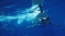Vor Küste Kaliforniens: Hai attackiert Kevin Costner und Ehefrau