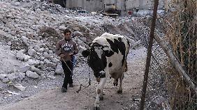 Kindheit in Damaskus: Ein Junge mit einer Kuh.