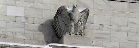 Steigen die Zinsen in den USA?: Was die Politik der Fed bedeutet