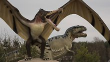 Schon vor Meteoriten-Einschlag: Dino-Sterben begann früher als gedacht