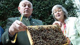 Zeichen setzen gegen Bienensterben: Bienenvolk bekommt Heimat auf dem Bundestagsgelände