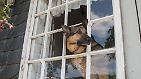 ... steht dabei der Deutsche Schäferhund. Er war 2014 die beliebteste Rasse. 10.470 Schäferhund-Welpen kamen in dem Jahr bei den Züchtern zur Welt.