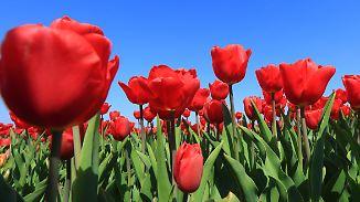 Bis zu 25 Grad bei kräftigem Wind: Am Wochenende bekommt Deutschland viel Sonne ab