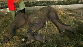 """Tod, Hunger, Überbelegung: Indonesischer """"Zoo des Todes"""" schockiert Tierschützer"""