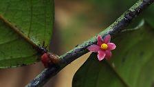 Von Anglerfisch bis Facebook-Pflanze: Die skurrilsten neuen Arten