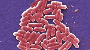 Anfang vom Ende der Antibiotika-Ära?: Super-Erreger taucht in den USA auf