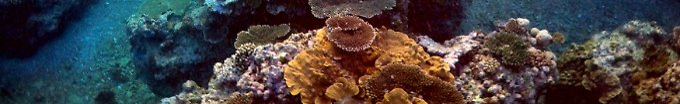Der Tag: 8:57 Bleiche tötete bereits jede dritte Koralle im Barrier Reef