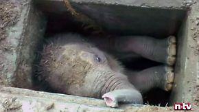 Kaum zu glauben, aber wahr: Elefanten-Junges rutscht in Abflussschacht