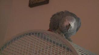 Kaum zu glauben, aber wahr: Plappernder Papagei löst Mordprozess aus