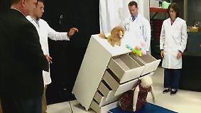 Rückruf nur in den USA: Umkippende Ikea-Kommoden töten sechs Kleinkinder