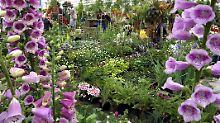 Wenn im Chelsea Garden die Blumen verwelkt sind, leichten die Zeichnungen weiter.