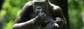 """Klimawandel nicht die größte Gefahr: Artenvielfalt leidet mehr unter """"alten Feinden"""""""