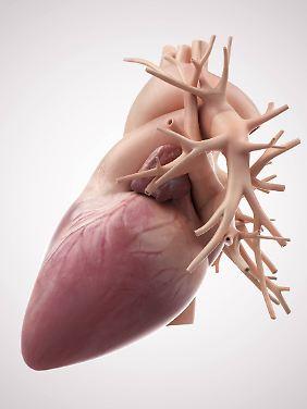 Ein menschliches Herz.