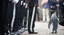 Seevogel wird befördert: Pinguin Nils Olav ist jetzt General