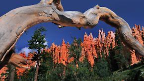Spektakuläre Naturlandschaften: Klamme US-Nationalparks erwägen Kooperation mit Konzernen