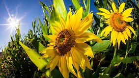 14 Sonnenstunden sind drin: Die Woche geht strahlend schön weiter