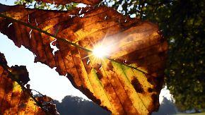 Goldener Herbst bei bis zu 26 Grad: Im Süden strahlt die Sonne
