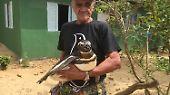Dann watschelt Dindim vom Strand aus zu Joãos Haus, wo er mittlerweile schon immer sehnsüchtig erwartet wird. Dieses Jahr dachte João, Dindim komme nicht mehr. Denn erstmals seit 2011 musste er seinen Geburtstag am 24. Juli nur mit seiner Frau Creusa, ohne Pinguin, feiern. 73 Jahre ist er geworden. Doch am 1. August wachte er auf - und da stand Dindim am Zaun.