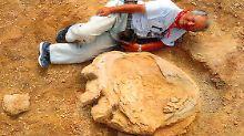 Meterlanger Fußabdruck: Riesige Dino-Spuren in Wüste Gobi entdeckt