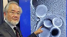 Medizin-Nobelpreis für Ohsumi: Autophagie hilft beim Kampf gegen Alzheimer
