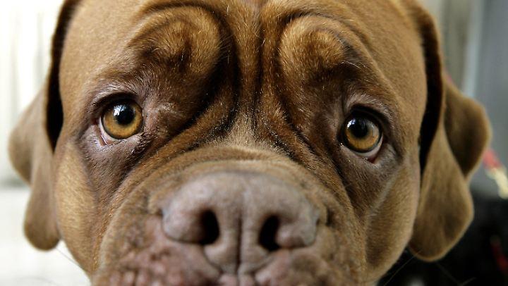 """Den """"Dackelblick"""" haben alle Hunde drauf."""