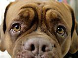 Frage & Antwort, Nr. 452: Können Hunde Menschen verstehen?